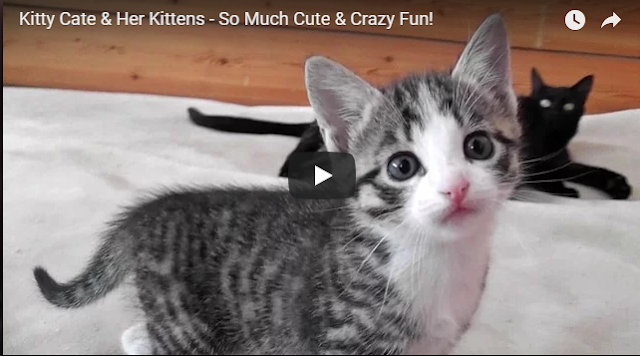 Kitty Cate with Her Kittens - So Much Cute and Crazy Fun