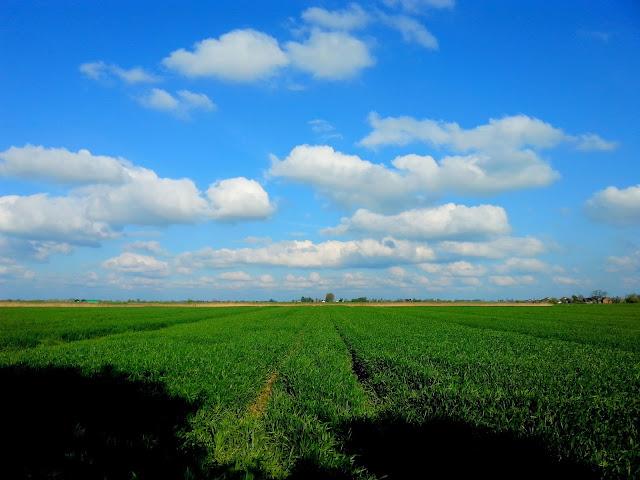 niebo chmury trawa