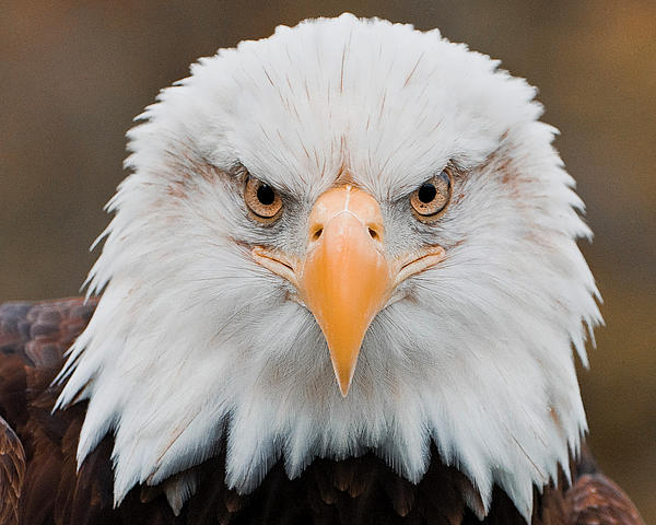 Turnwrite Through The Lens Of An Eagle