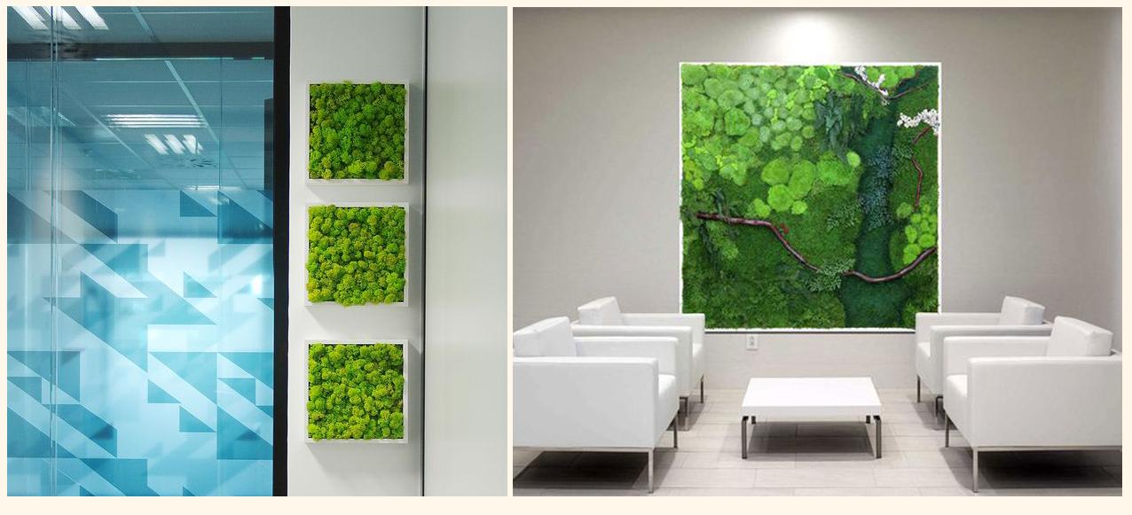 Картинки по запросу 6 причин, по которым стоит иметь дома стабилизированные растения