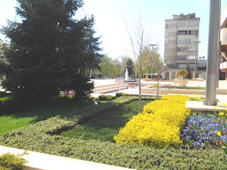 Bedding Plants, Blooming, Yambol, Yambol City Centre,