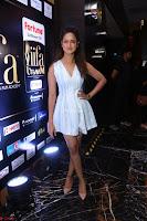 Shanvi Looks super cute in Small Mini Dress at IIFA Utsavam Awards press meet 27th March 2017 118.JPG