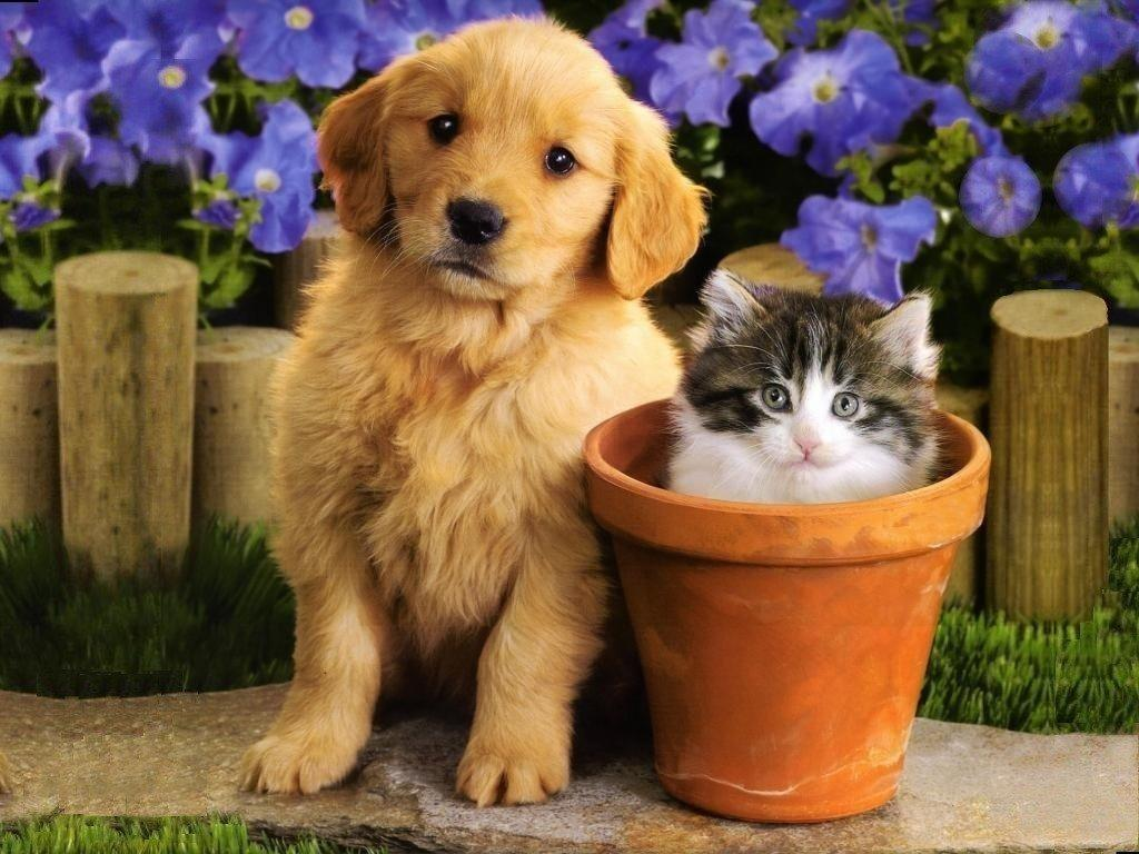 Cute Puppies And Kittens Wallpaper: Unique Wallpaper: Happy Puppy
