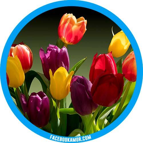 imágenes de tulipanes para perfil