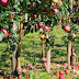 Apple Forest Escape Juego