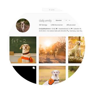 Screenshot instagram account daily emily labrador
