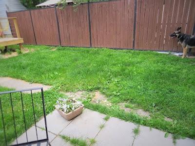 yard before dry well