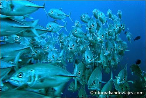 peces en Layang Layang