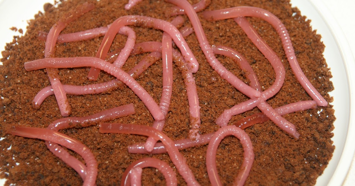 I M Hungry Too Jelly Worms In Biscuit Dirt