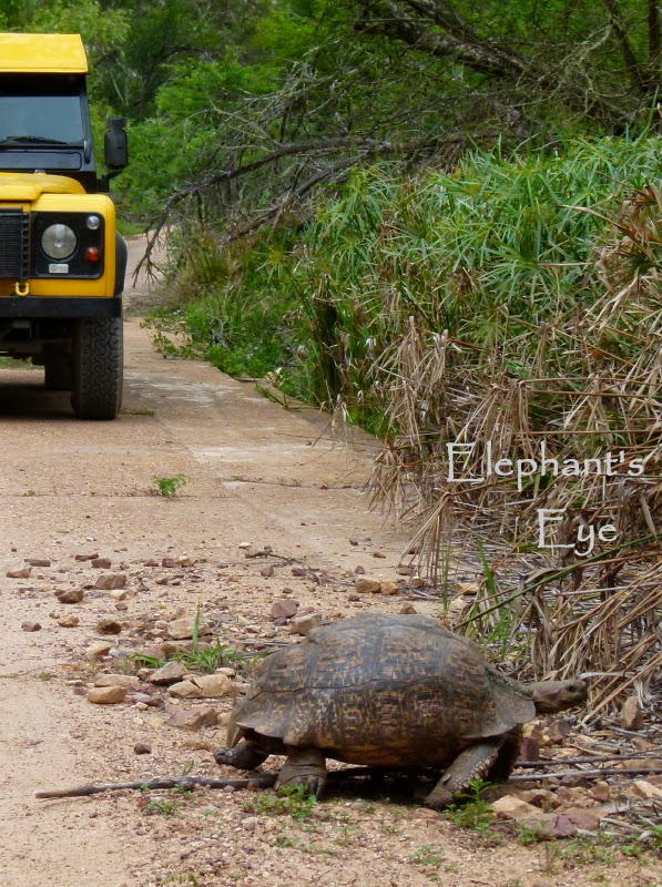We stop carefully for tortoises