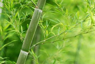 Bambu Tanaman Tropis