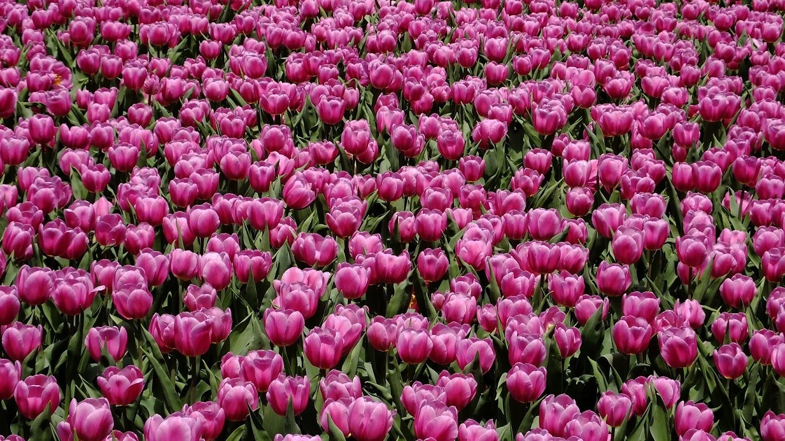 Fond ecran printemps fleurs fonds d 39 cran hd - Catalogue de fleurs gratuit ...