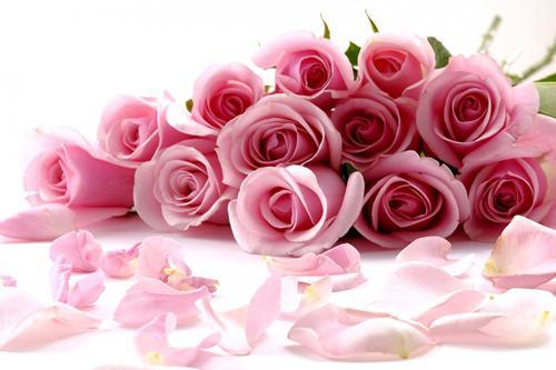 تفسير حلم رؤية الورود في المنام موسوعة المعرفة الشاملة
