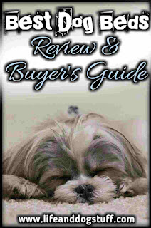 Best Dog Beds Review and Buyer's Guide