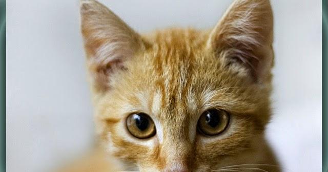 Kumpulan Nama Untuk Kucing Peliharaankucing Peliharaan For Android