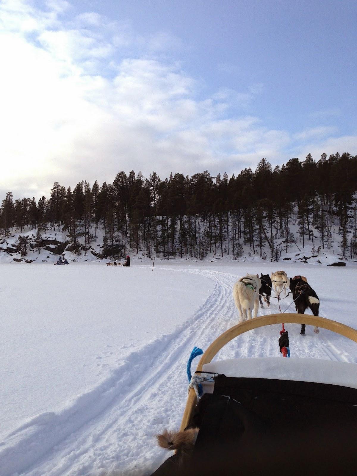 Husky Sled, Arctic Circle