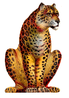 leopard animal big cat image transfer illustration clipart download