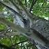 इस पेड़ में भी हैं Feelings, छूने से होती है गुदगुदी
