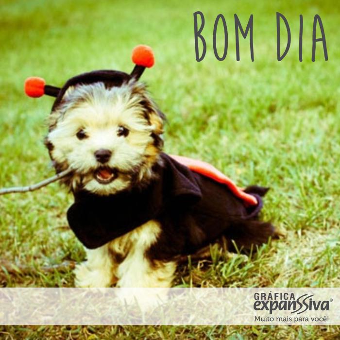Mensagem de Bom Cachorro