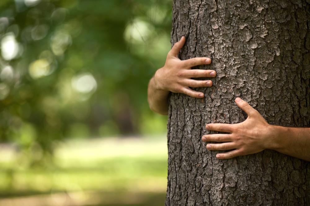 Wählen Sie Ihre Holzart | Real Wood Qualitätsböden