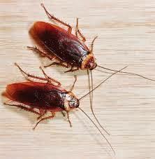 Bakırköy Hamam Böceği İlaçlama Servisi