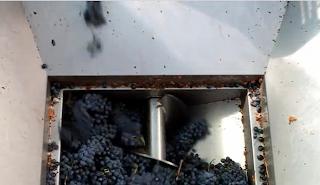 maquina desengaçadeira esmagadeira uva produçao vinho