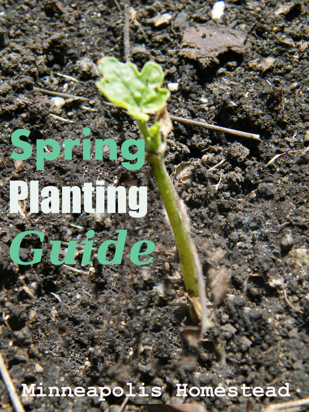 Mn spring planting schedule direct and indoor minneapolis homestead in minneapolis our average last frost is april 30 according to the farmers almanac and our average last known killing frost is may 10 according to mightylinksfo