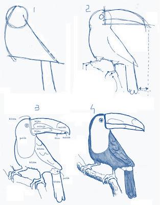 menggambar burung toucan