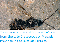 http://sciencythoughts.blogspot.co.uk/2012/06/three-new-species-of-braconid-wasps.html