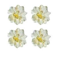 https://www.essy-floresy.pl/pl/p/Gardenia-bialo-zolta/180