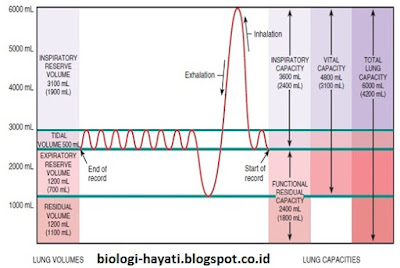 Spirogram dari volume dan kapasitas paru, (Tortora, 2012).