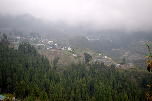 Coniferous Trees, East Sikkim