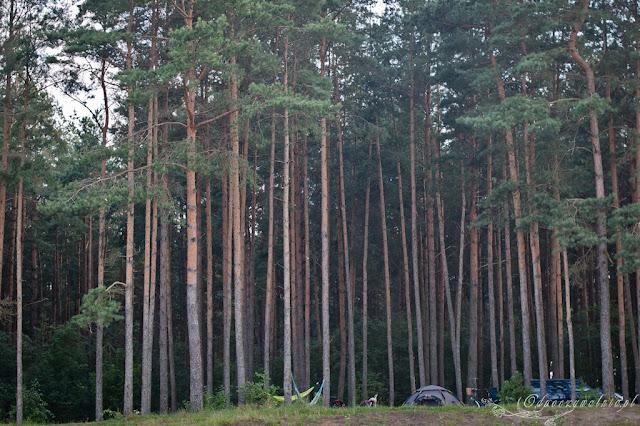biwak, camping z dziećmi, podlasie, białowieża