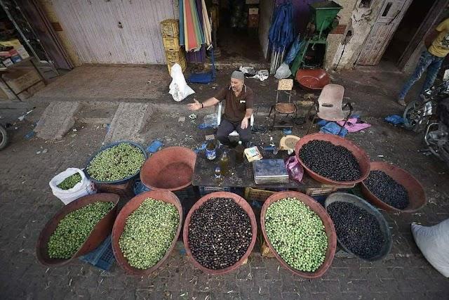 فلسطين :: صور : انواعا مختلفة من ثمار الزيتون في #غزة .  2017