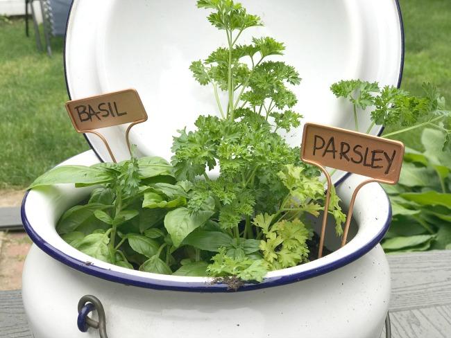 Vintage Enamelware Chamber Pot Herb Garden
