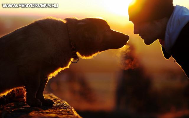 Állatok spirituális gyógyítása