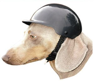 motorcycle helmet for dogs