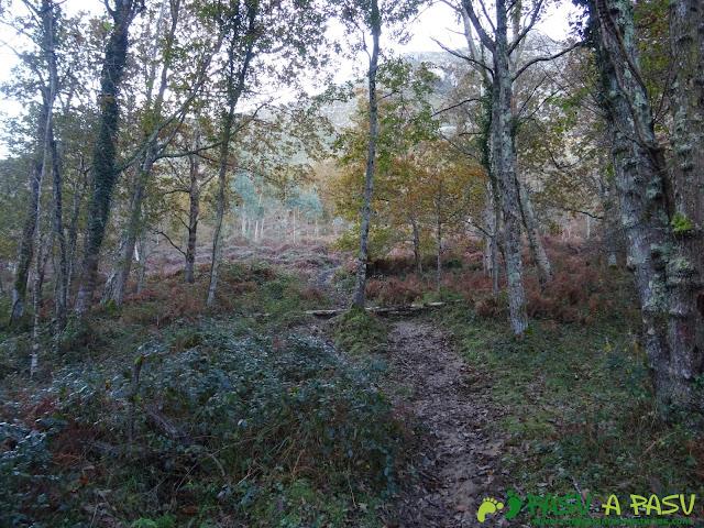 Ruta Cerro de Llabres: Sendero hacia el Collado la Prida