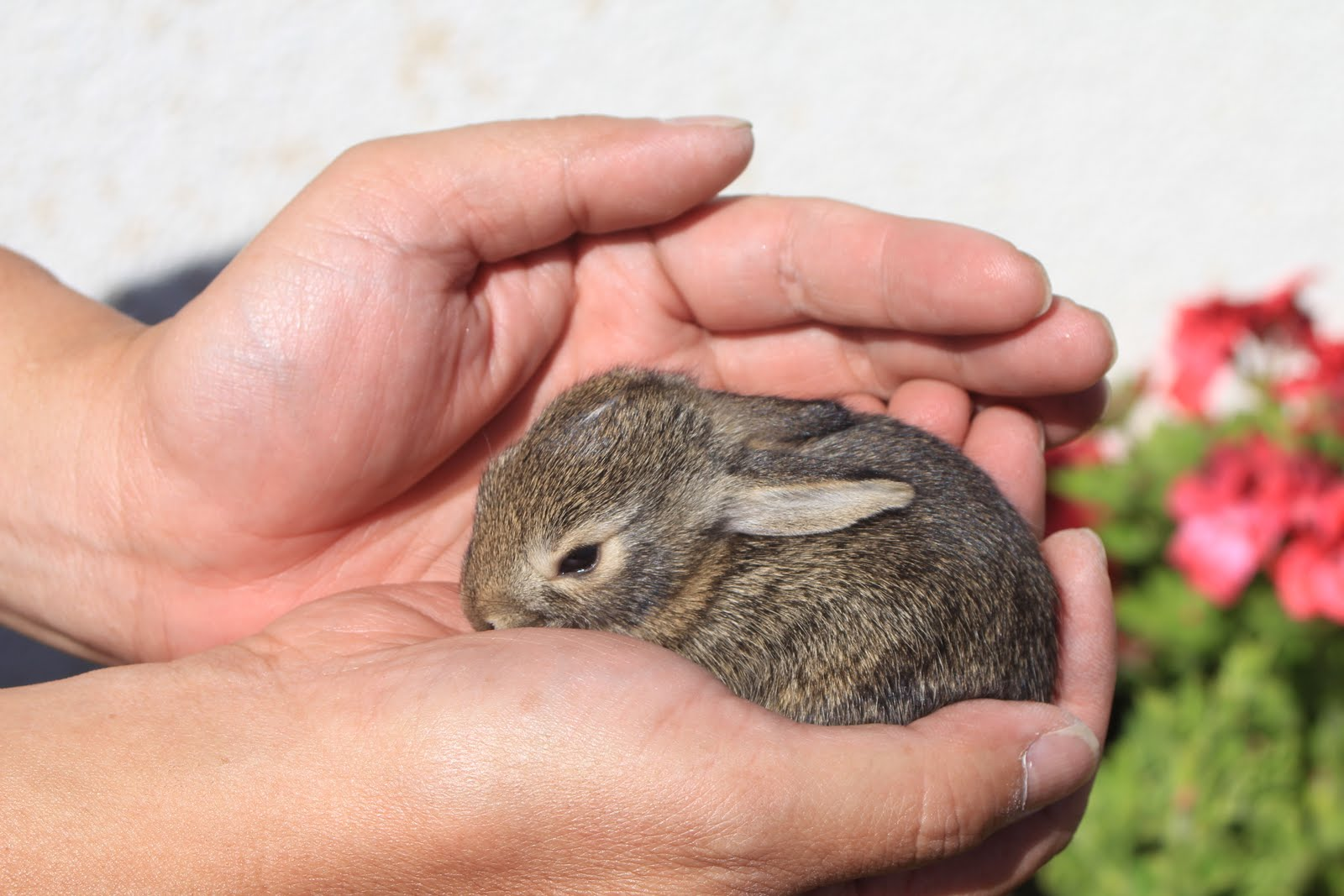 rabbit care Rabbit care: it is essential that your rabbit be healthy and have all its needs met in order to have success with training and to be a happy pet.