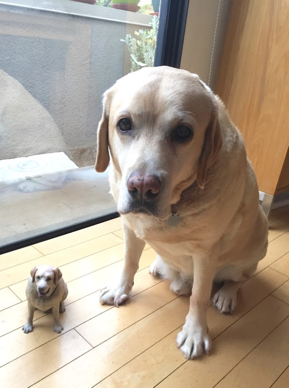 Labrador Cooper 3D print