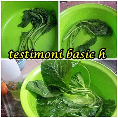 Image result for TESTIMONI BASIC h