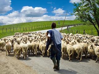 Προτεραιότητα στα πρόβατα