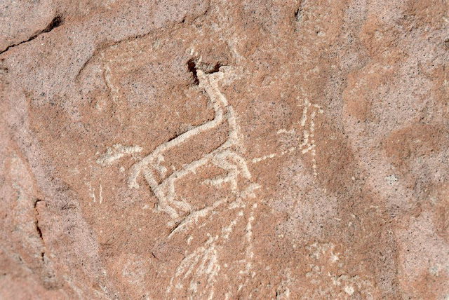 Chile's rock art llamas divulge secrets of ancient desert culture