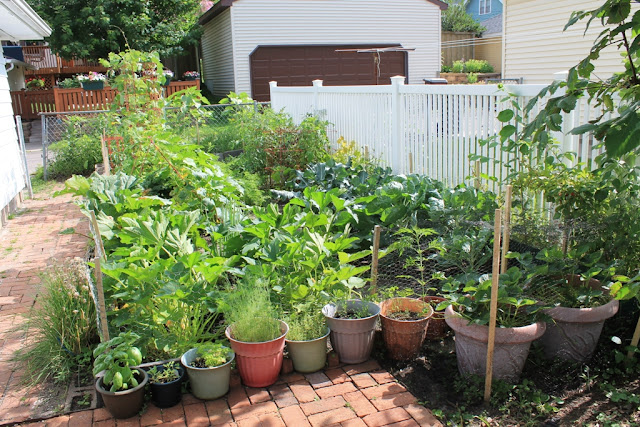 Our garden at two months.
