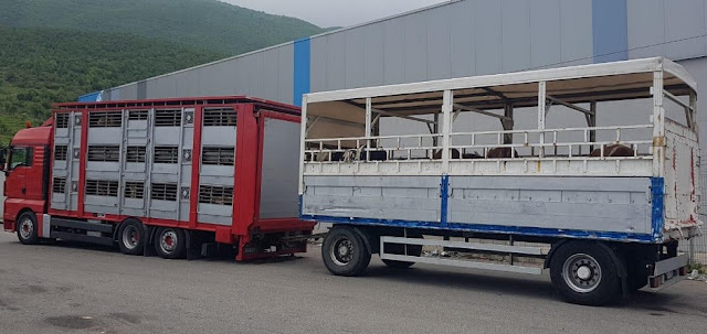 Albanian Food Authority: 42 calves from Serbia in quarantine, 24 tons of salt from Austria blocked