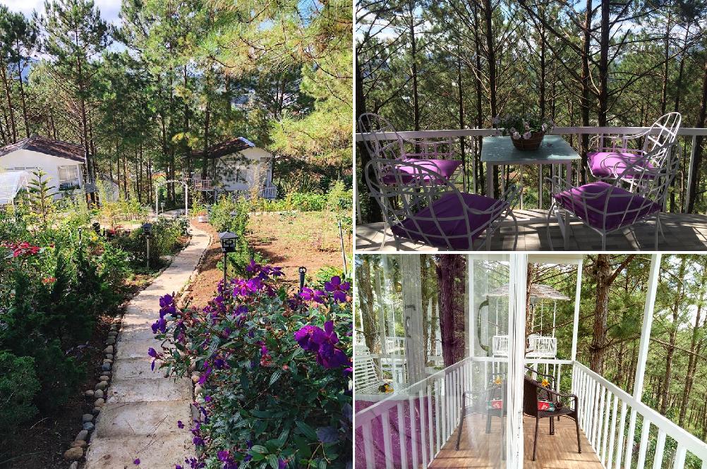 """Pine Hill Homestay Đà Lạt: Những ngôi nhà """"cổ tích"""" tím biếc trong rừng thông"""