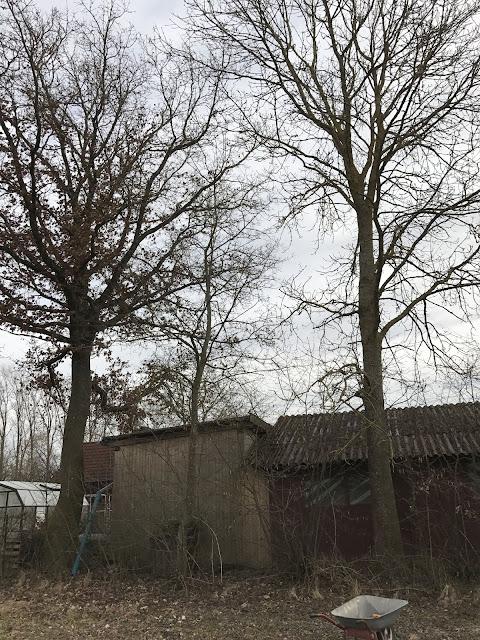 Große Bäume hinter der Nebengebäuden (c) by Joachim Wenk