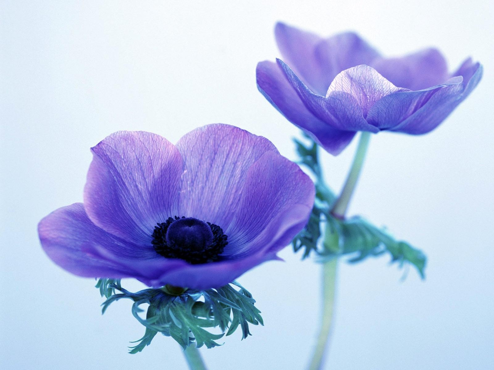Fondo Primavera álbum Classic Flores Violetas: Imagen Flores Bonitas