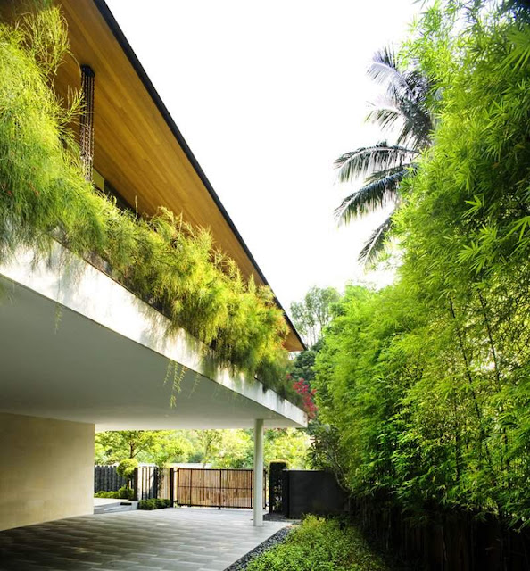 Tanga House Wall Garden