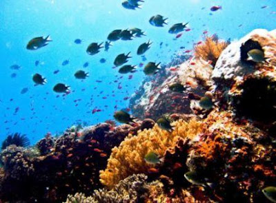 Bunaken Marine Park located in North Sulawesi Province, Indonesia tourist spots